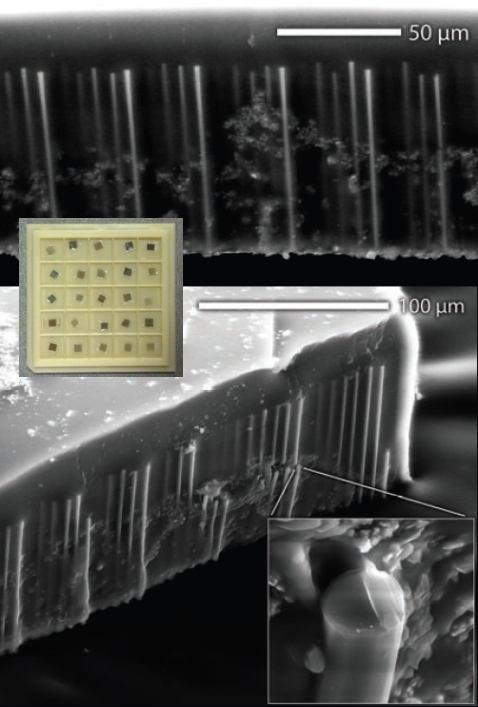 Микрофотографии массива кремниевых «деревьев»