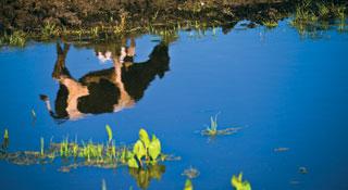 Природа ведь оставляет на поверхности земли листья, стебли, она же их не зарывает на глубину, правда? Вот и мы не зарываем