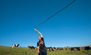 В случае производственной необходимости пастухом может стать любой работник